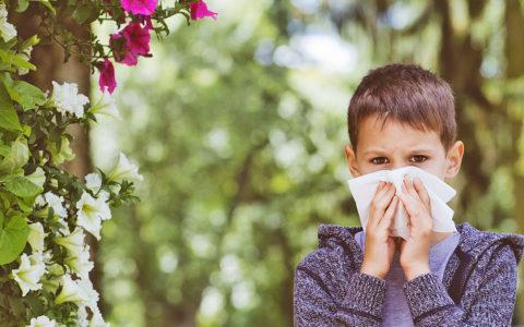 Survival Guide to Seasonal Allergies