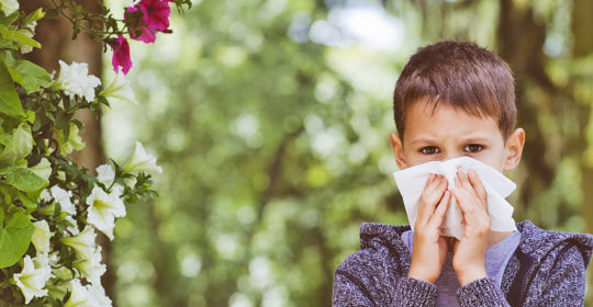 Survival Guide to Seasonal Allergies