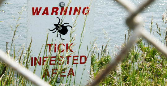 Lyme Disease and Tick Bite FAQs